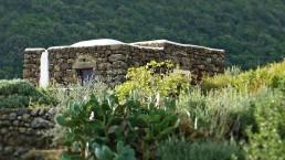 Dammuso - Pantelleria - La viola del pensiero - Coste Ghirlanda