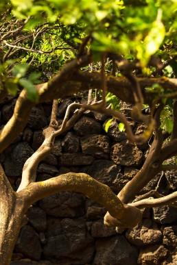 Coste Ghirlanda - Tenuta Coste Ghirlanda - Pantelleria